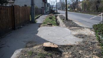 Mégis kivágták a Szentendrei úti fák egy részét