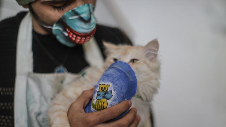 Úgy tűnik, macskák is elkaphatják az új koronavírust