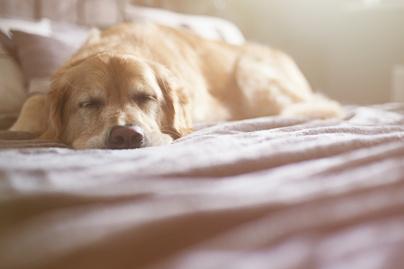 kutya kép