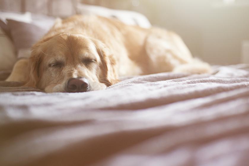 Netes szenzáció lett a gyanútlanul pihenő kutyából egy furcsa hasonlóság miatt
