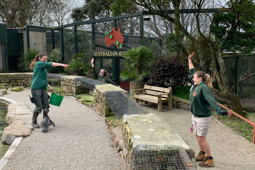 Az állatok védelme érdekében négy dolgozó, Izzy, Emily, Layla és Sarah-Jane önként jelentkeztek arra, hogy beköltözzenek az állatkertbe a karantén idejére. A 12 hetes izoláció alatt a többi dolgozó felváltva fog segíteni nekik.