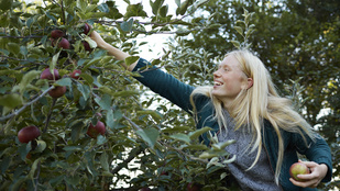Miért kell oltani a gyümölcsfákat?