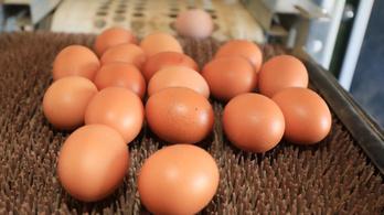 Nagyon óvatosan essen neki a tojások hipózásának