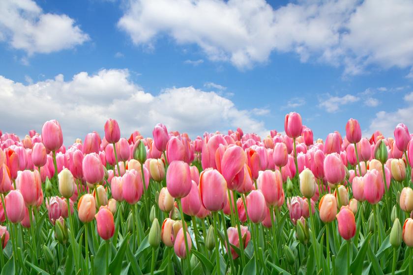 Jó hírünk van az időjárásról: megérkezik az igazi tavasz a héten