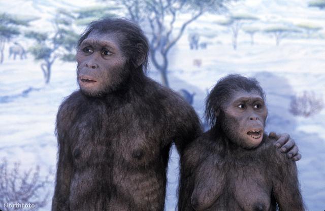 Az Australopithecusok folyton másfelé tekintgettek