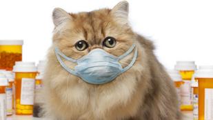 Ezek az állatok terjesztik a legsúlyosabb, emberre veszélyes betegségeket