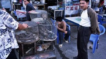 Az ENSZ egyik vezetője szerint be kellene tiltani a vadállatpiacokat