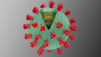 Rossz hír, fehérjébe csomagolva: a koronavírus genomja