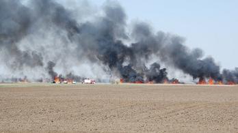 Leégett a Kis-Fehér-tó nádasa, amely több gémfajnak szokott otthont adni