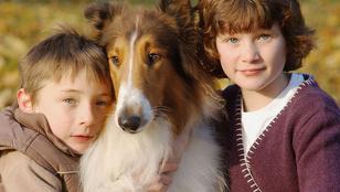 Ennél meghatóbb ma már nem lesz: így szökött haza a gazdájától elszakított kutyus