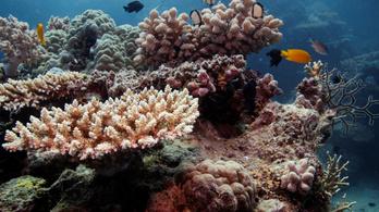 Borzasztó a helyzet a Nagy-korallzátonynál