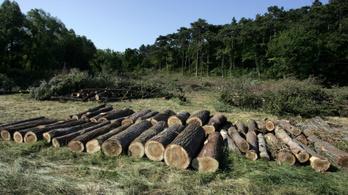 A kormány azt ígéri, kevesebb lesz a tarvágás a magyar erdőkben