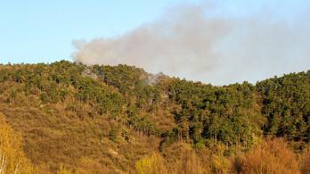 Több hektáron égett az erdő Budaörsnél