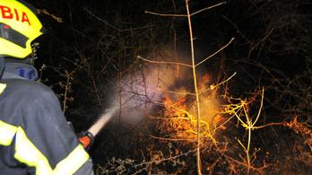 Szombat hajnalra sikerült eloltani a budaörsi erdőtüzet