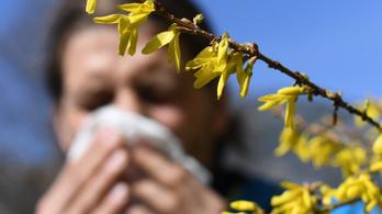 Az allergia egyszerűen megkülönböztethető az új koronavírus-fertőzéstől