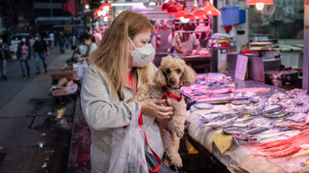 Lekerülhetnek a kutyák a kínai haszonállatok listájáról