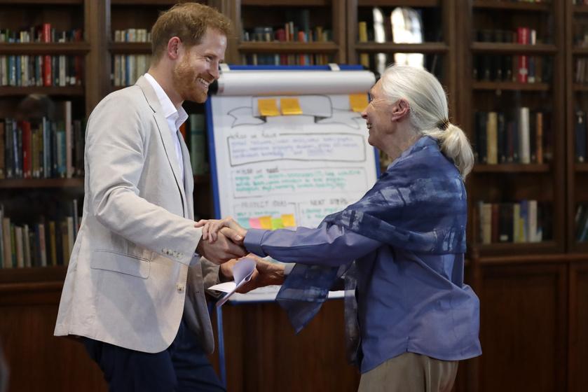Harry herceg és dr. Jane Goodall jó viszonyt ápolnak egymással.