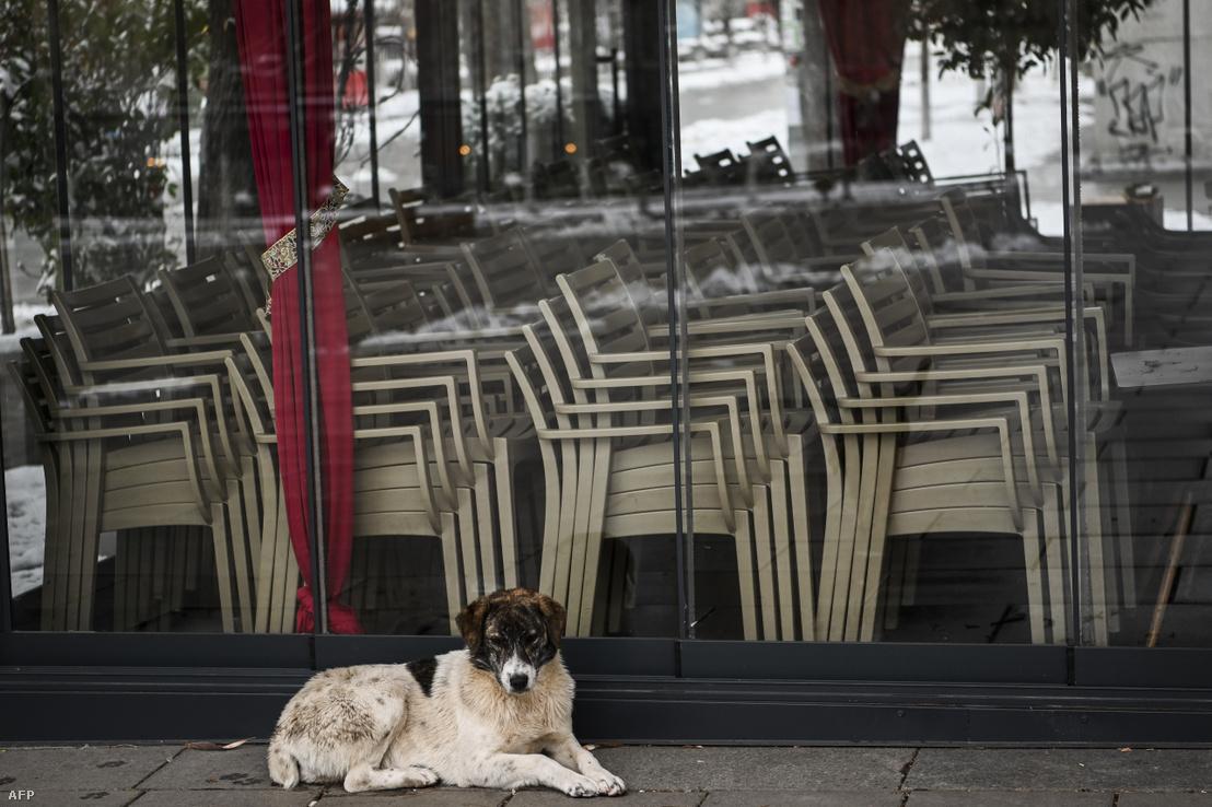 Kóbor kutya Koszovó fővárosában, Pristinában egy, a járvány miatt zárva tartó kávézó előtt 2020. április 1-én