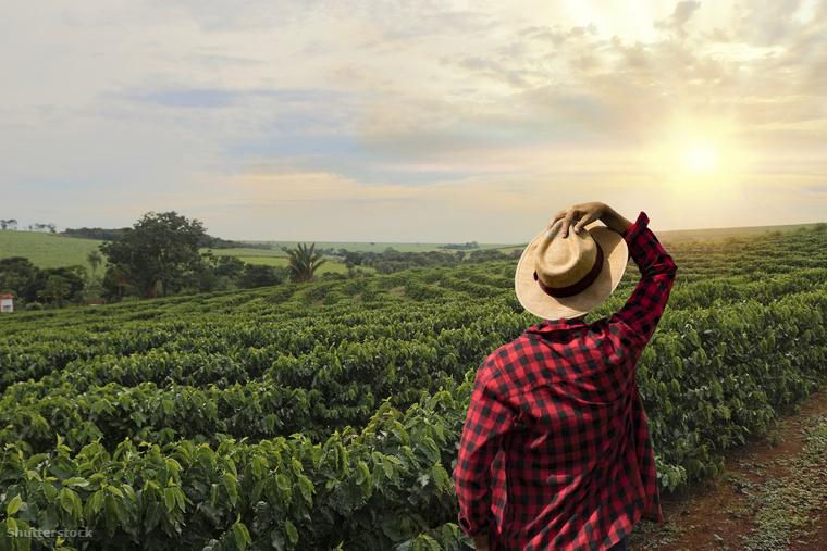 Tudatos, kitartó munkát és odafigyelést igényel, hogy a kávé a jövőben is mindenki számára elérhető maradjon és ne váljon luxuscikké az éghajlati változások, illetve egyéb kedvezőtlen hatások miatt