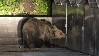Riasztólövéssel kergettek el egy medvét Székelyudvarhelyről