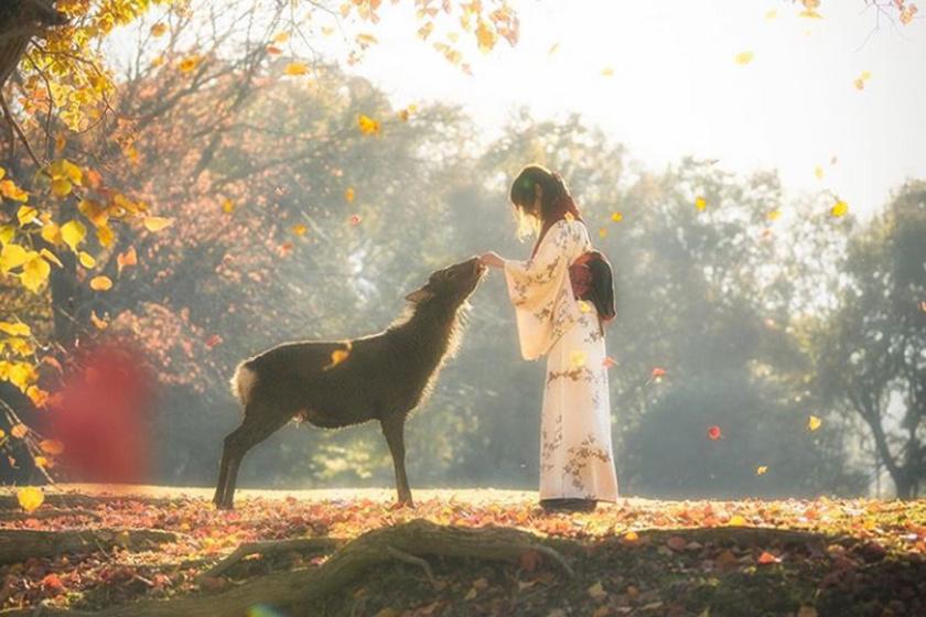 Varázslatos pillanatot kapott el a fotós: átütő a mágikus ereje