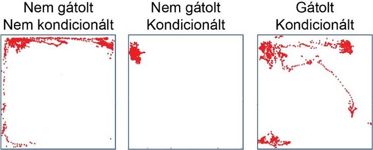 A talamikus pálya optogenetikai gátlása az amygdalában megakadályozza a kísérleti állat hanginger kiváltotta félelmi magatartását (ledermedését). A gátolt állat mozgás-aktivitása (piros) a naiv, nem kondicionált állatához hasonlít, és sokkal intenzívebb, mint a nem gátolt, kontrol állaté (a teljes mozdulatlanság a félelem jele)