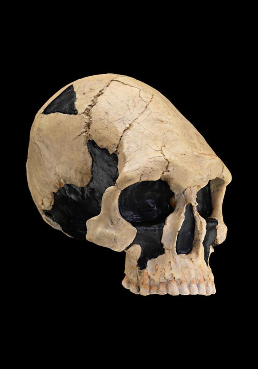 Ez a 9-13 ezer éves, kow swampi lelet arról mesél, milyen alakúra lapították koponyájukat Ausztrália ősi lakói.