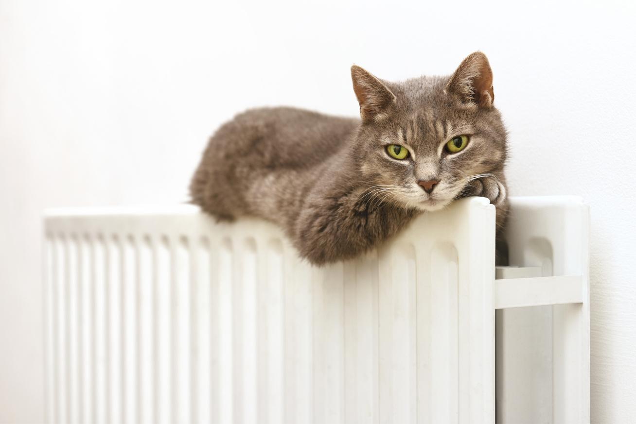 cica-radiatoron