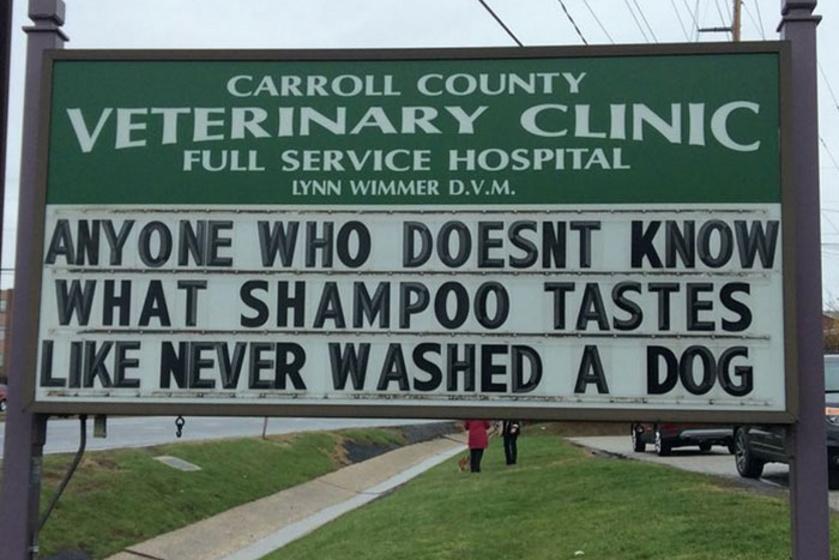 Bárki, aki nem tudja, milyen ízű a sampon, még sosem fürdetett kutyát.
