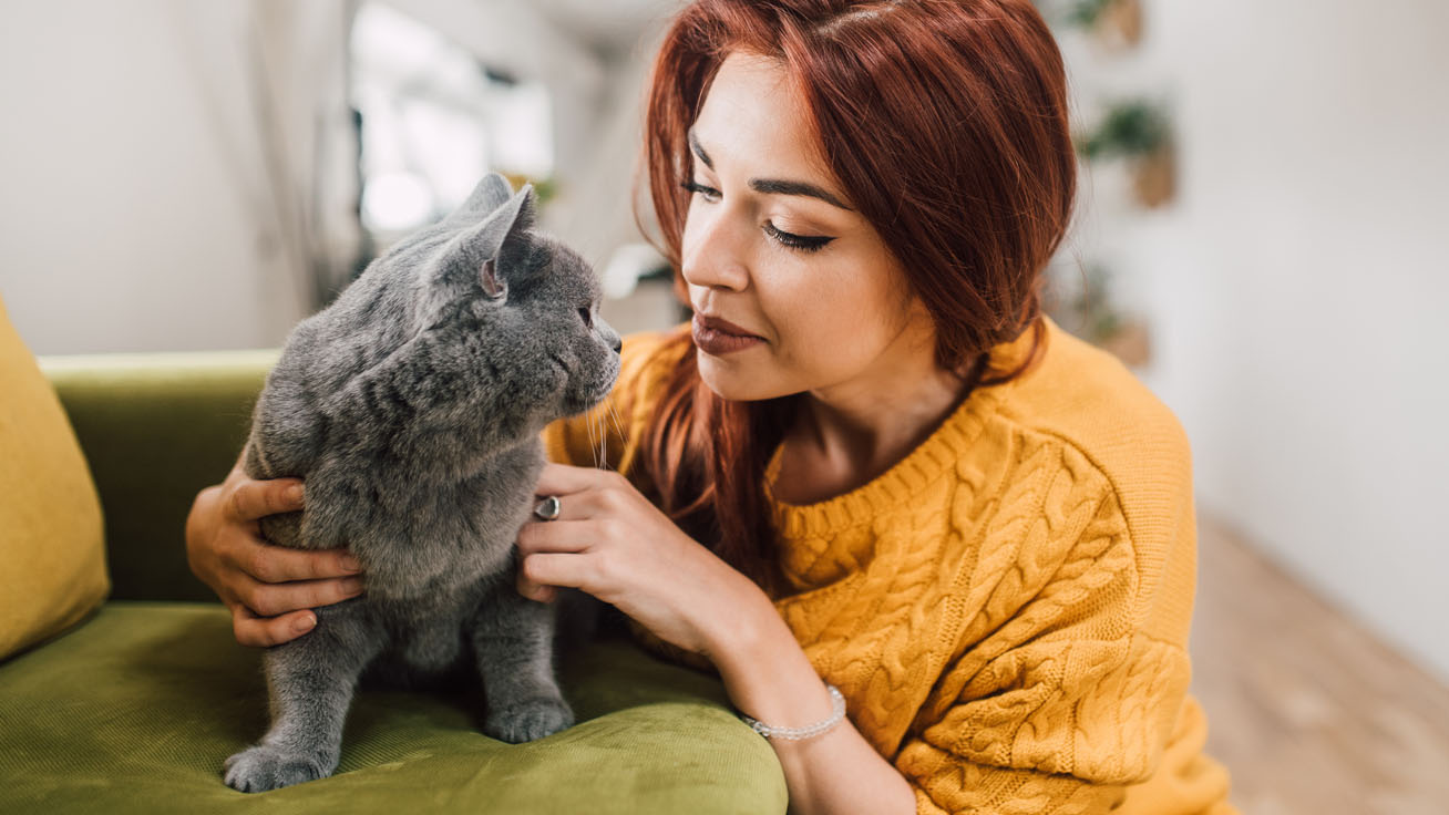 macska gazdi cover