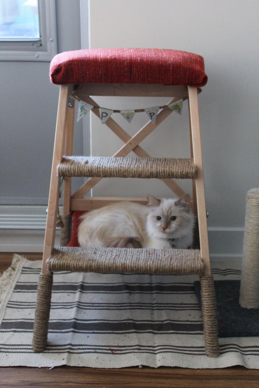 macskaletra2