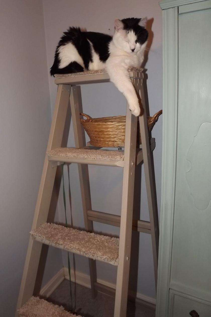 macskaletra1