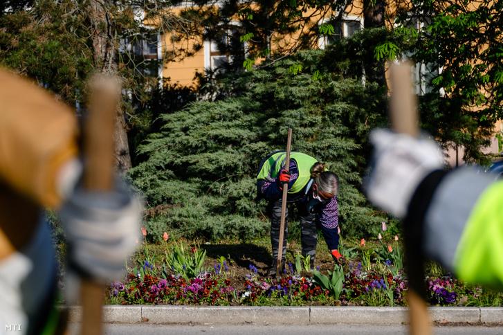 A Tatai Városgazda Nonprofit Kft. munkatársai parkfenntartási és kertészeti munkát végeznek a tatai Hősök terén 2020. április 15-én. A nonprofit kft. egyszerűsített munkaviszonyban - napi bejelentéssel - városüzemeltetési feladatok ellátására foglalkoztat olyan helyi munkavállalókat, akik a koronavírus-járvány miatt vesztették el munkájukat.