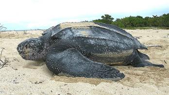 Floridában az élővilág nyert a karanténon