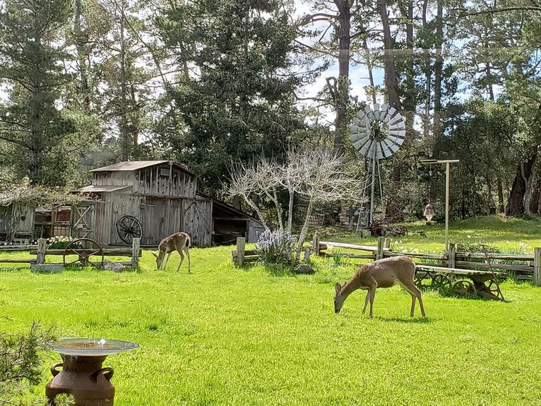 Mary hátsó kertjénél idilibb képet el sem lehet képzelni: zsengezöld fű, nárciszok, égig érő fák és őzek