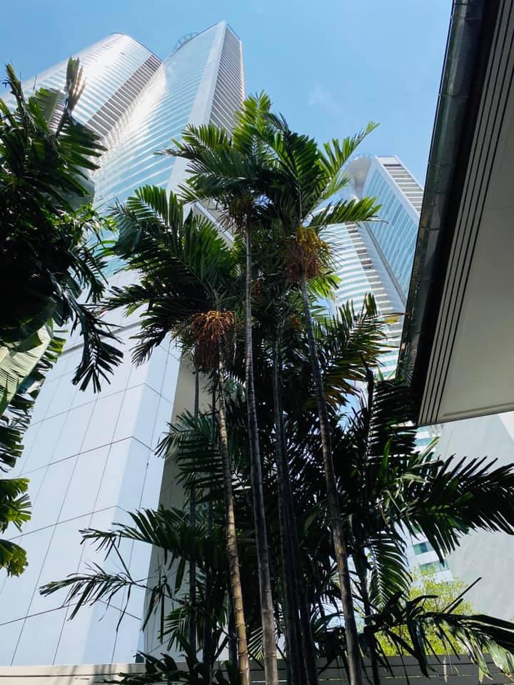 Sophie bangkoki lakása fölé nem hegyek, hanem felhőkarcolók tornyosulnak