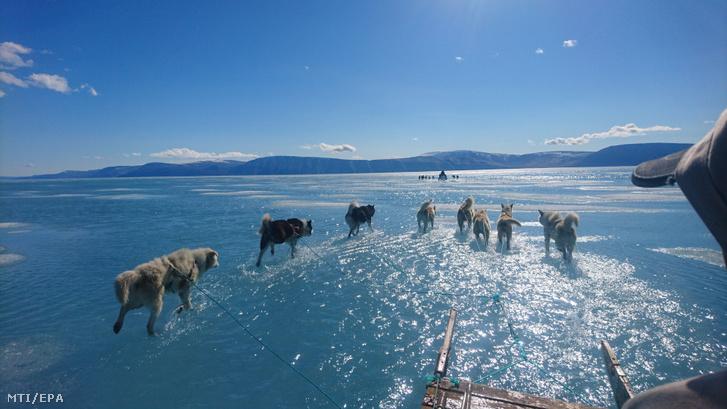 A Dán Meteorológiai Intézet által közreadott képen a tenger part menti olvadó jegén haladnak kutyaszánok Grönland északnyugati részén 2019. június 13-án. A szokatlan meleg miatt gyorsan felhalmozódott az olvadékvíz a felszínen rekedt, mert a jégen lévő nagyon kevés repedés miatt nem tudott levezetődni a szilárd jégről.