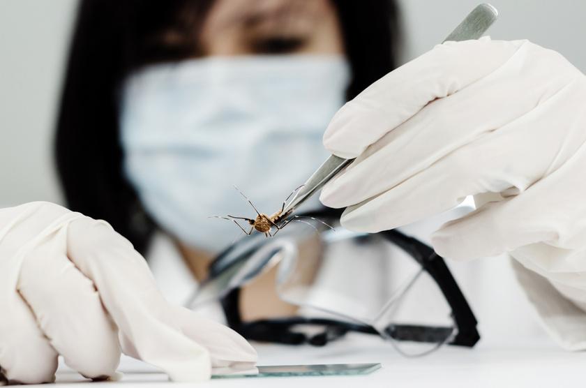 szunyog-virus-kutato