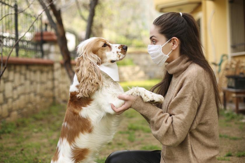 kutya-ember-maszk