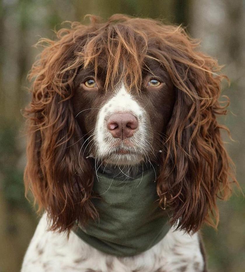 A gazdija szerint Finn frizurája nemcsak az interneten, hanem a való életben is vonzza az embereket, hiszen aki meglátja, egyből meg szeretné fogni a különleges hajkoronát.