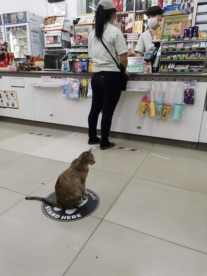 Ez a cica tudja, hová kell állnia, hogy biztonságos távolságot tartson másoktól.