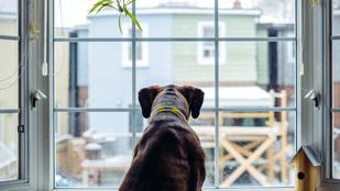 Hogyan sétáltathatom a kutyámat, ha karanténba kerülök?