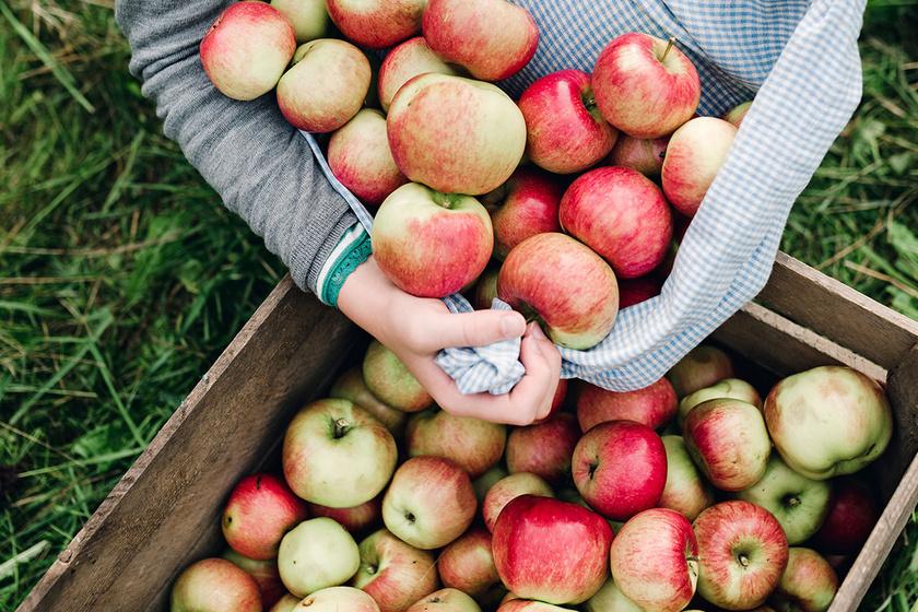 Ha így tárolod az almát, sokáig friss és ropogós marad - Erre a 3 dologra figyelj oda