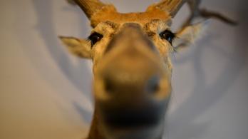 Újabb 1,67 milliárdot csoportosítanak át a vadászati kiállításra