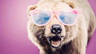 Te tudod, mitől medve a medvehagyma?