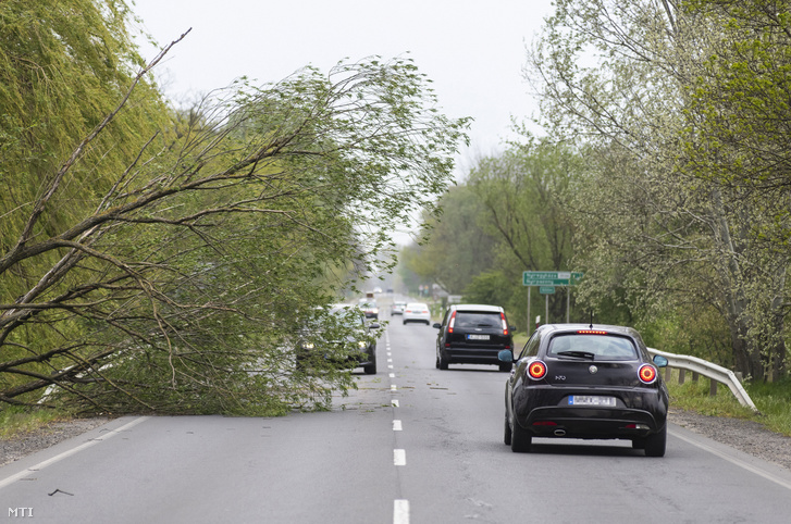 A viharos szélben kidölt fa a 4-es számú főúton, Nyírpazony és Nyírtura között, 2020. április 25-én.
