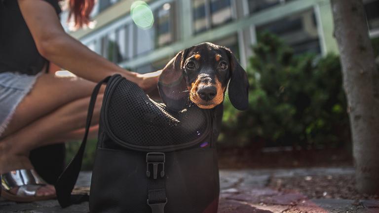 Mitől boldog a városi kutya?