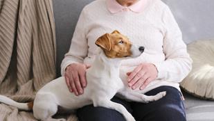 Hogyan gondoskodhatok a kutyámról, ha kórházba kerülök?