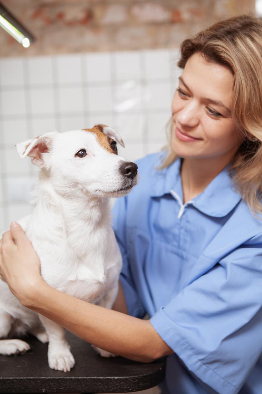 kutya-allatorvosnal