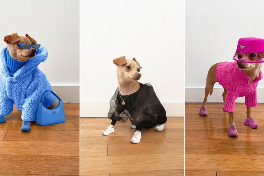A divatdiktátor kutyus stílusosabb, mint a legtöbb influenszer - Elképesztően sikkes szettekben pózol